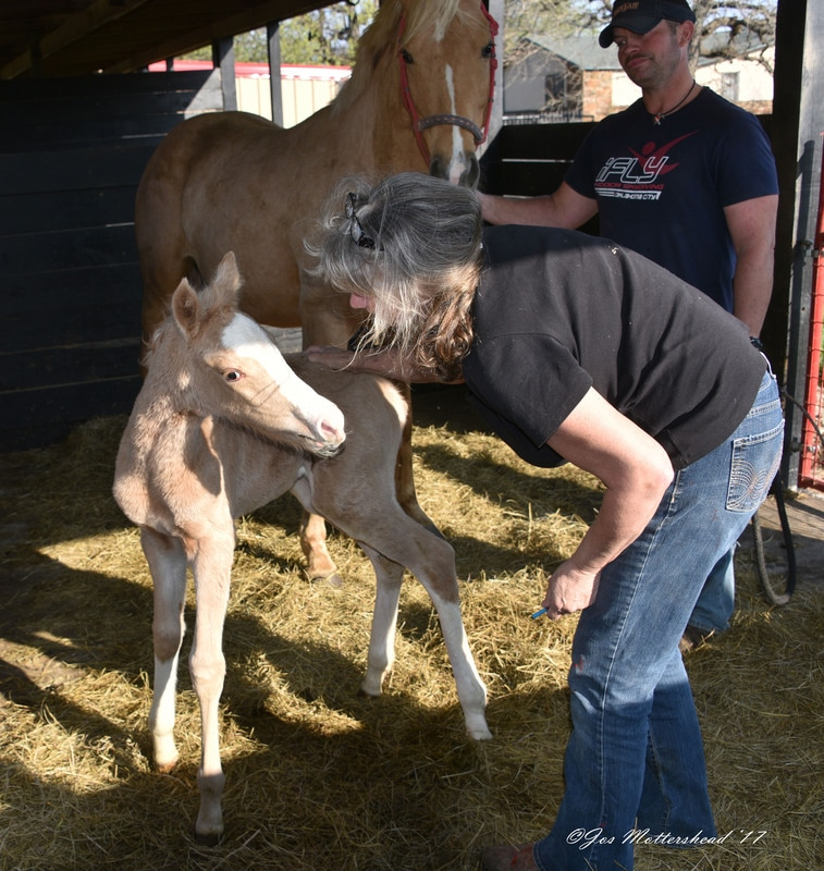 Imprinting a foal