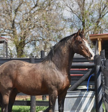 Managing Stallion Behavior