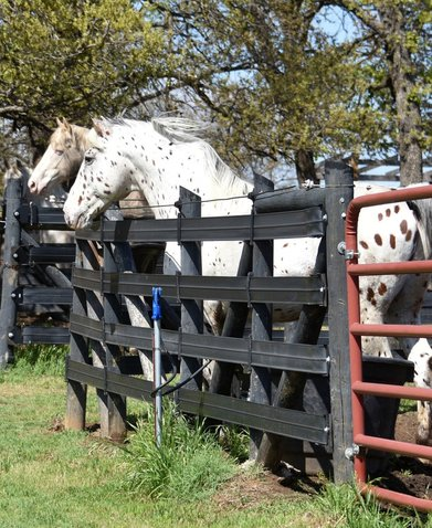Stabling multiple warmblood stallions